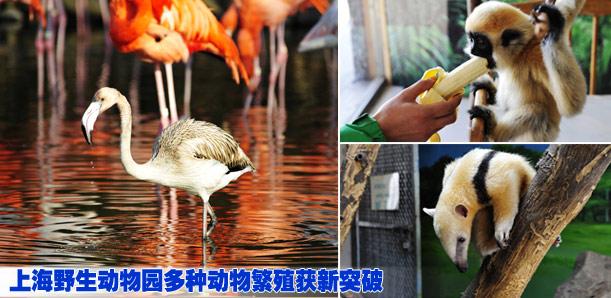 上海野生動物園多種動物繁殖獲新突破