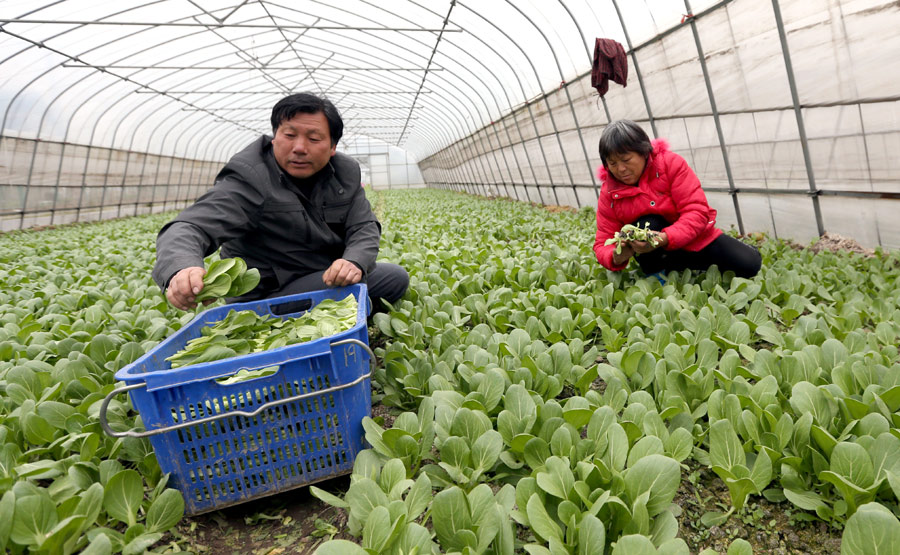 xxx吨水果和蔬菜深加工项目可研报告