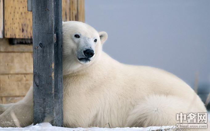 动物们的可爱瞬间 永恒于摄影师的镜头下