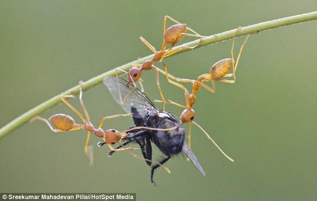 蚂蚁素描步骤图解