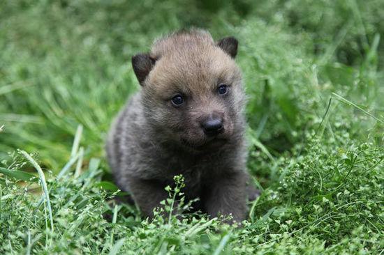 """动物宝宝齐卖萌 上海野生动物园举办""""小动物欢乐节"""""""