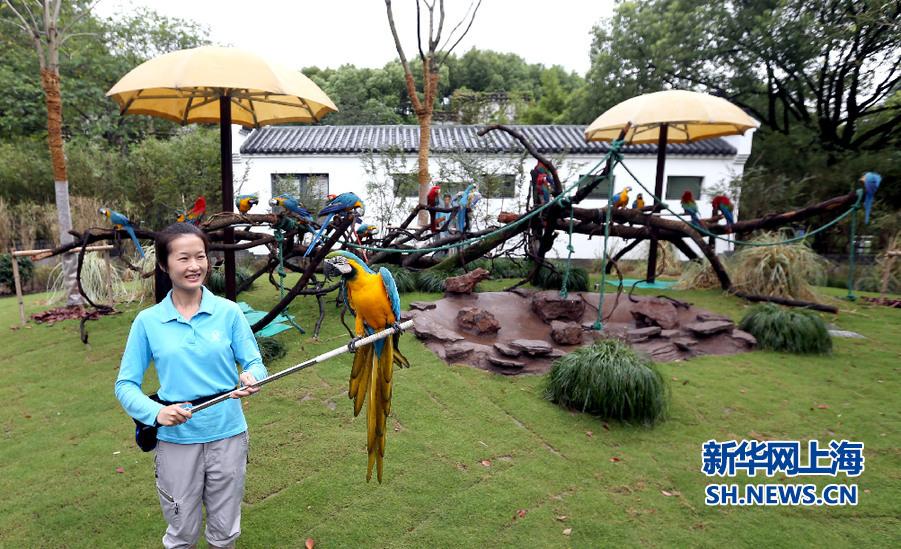 徽派建筑秀 金刚鹦鹉美——上海动物园金刚鹦鹉展区崭新开放