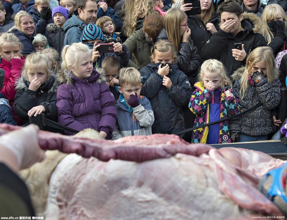 动物园为避免近亲繁殖,扑杀健康的雌狮,并于15日当天公开进行解剖