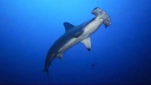 世界濒危海洋动物现状