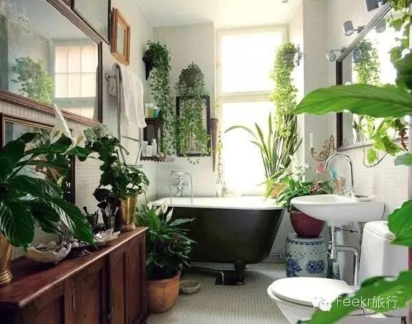 欧式窗户仿真绿植
