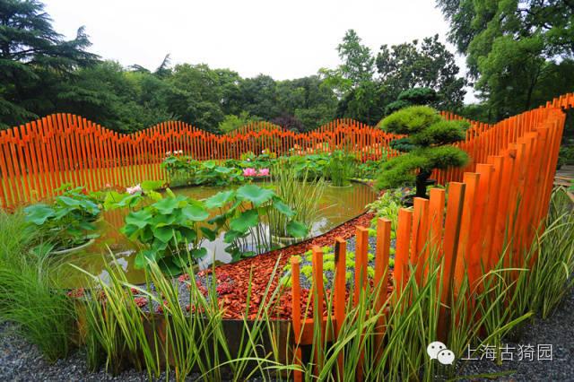 在這個溫暖而雨量充沛的季節裏,古猗園芙蓉長得茂盛,開得艷麗。第四屆上海荷花睡蓮展將于7月1日正式在江南歷史文化名園上海古猗園開幕。敬請光臨    萬株荷蓮    清水出芙蓉水天一色,波光瀲艷,循路徜徉,荷花滿塘。古猗園的幽靜曲水是一個流動的舞臺,荷花、睡蓮仙子在這裏競秀風姿。今年,古猗園在10000平方水域和百畝之園,展示荷花品種300余種、睡蓮品種200余種,同時大面積展出太空蓮36號、太空飛天、舒廣袖、太空蓮3號、太空蓮58號、綠園紫絹、清波玉環等太空育種、輻射