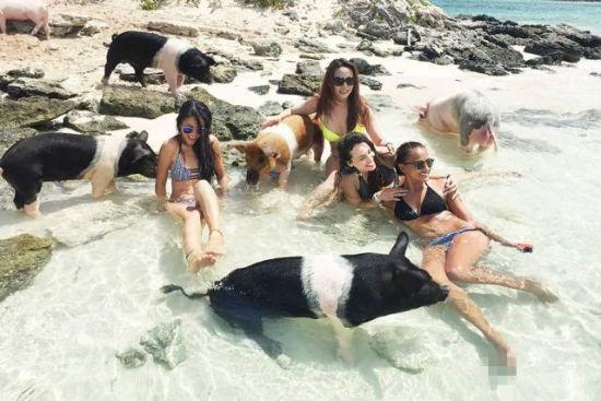 疯狂动物园 盘点被小动物占领的小岛-新华网
