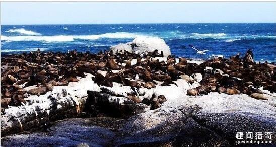 疯狂动物园 盘点被小动物占领的小岛