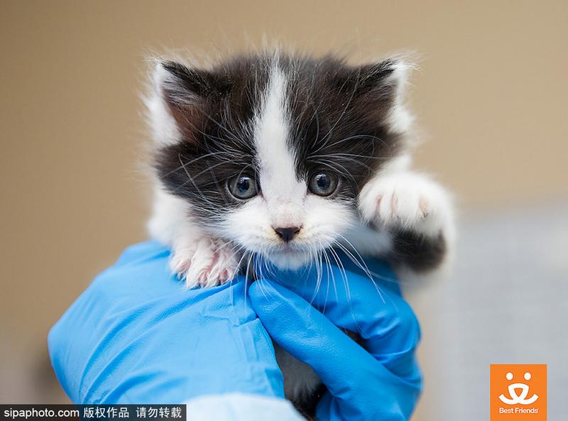 一家动物救助站,多只可爱的小猫被救,挤在一起睡觉,场面温馨.