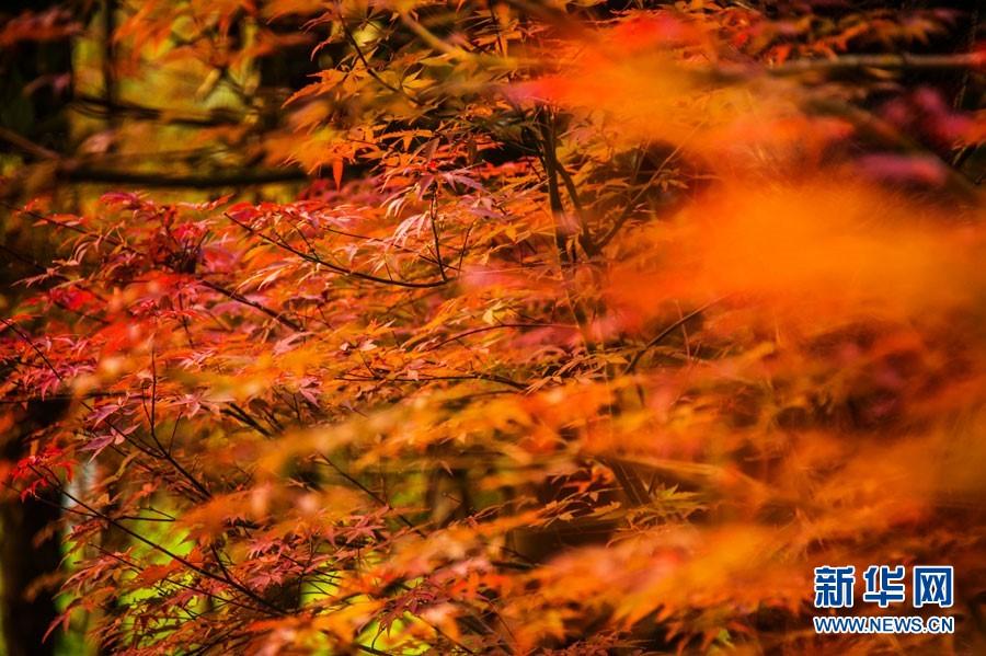 南方秋景风景图片