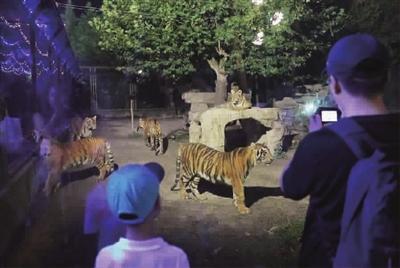 游客在上海野生动物园观看夜晚的老虎,黑熊,火烈鸟等动物.
