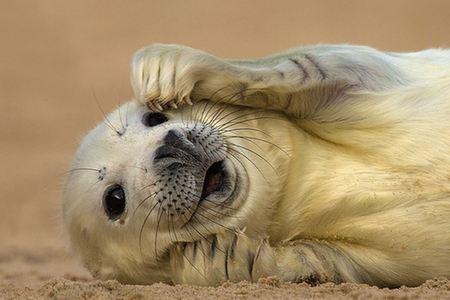 灵动自然:英国野生动物摄影大赛获奖作品曝光
