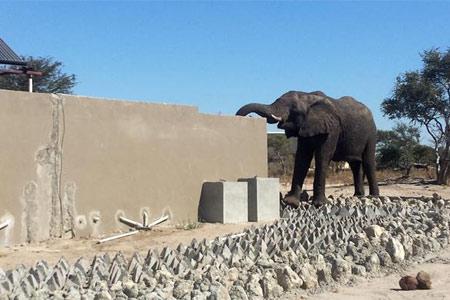 大象墙头探鼻喝马桶水