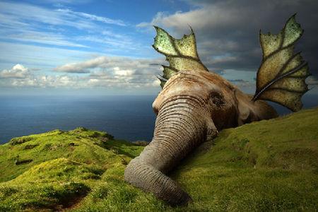 当动物占领地球