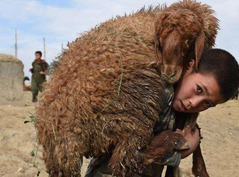 阿富汗保护野生动物现状